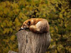 Firefox by Fredrik Kadesjö on Flickr.