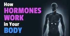 """""""The Fantastical World of Hormones"""" explores the science of hormones and shows how radically they have changed over the last decade."""