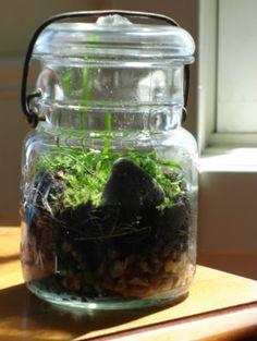 terrarium instructions for the huge jar i got for christmas