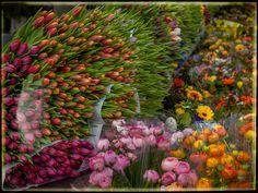 Flowers by Holger Bernhofen - Photo 147130753 - 500px