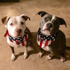 @HoundsandHeroes American Flag Doggy Bandanas by #FTLAApparel @BJlaflin @JustbLisa