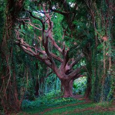 Tree of Life, Maui, Hawaiiphoto by andre