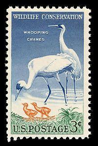 This 1957 stamp, designed by Bob Hines and C.R. Chickering, focuses on a female whooping crane bending attentively over her two downy young, with the male bird in the rear standing guard.