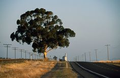 A lone eucalyptus tree alongside a road in Victoria's wheat belt, Eucalyptus Tree, World Images, Climate Change, Habitats, Places Ive Been, Environment, Country Roads, Trees, Classroom
