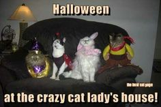 Crazy Cat Lady Meme, Crazy Cat Lady Costume, Crazy Cats, Kitty Costume, Funny Halloween Pictures, Funny Christmas Pictures, Funny Animal Pictures, Animal Pics, Funniest Pictures
