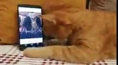 , Blind cat gives his favorite pianist a hug every...