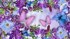flowers and butterflies | Flowers Butterflies HD wallpapers