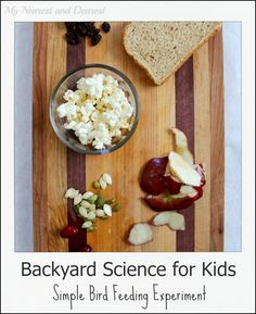 A simple backyard science experiment for kids of all ages. Perfect for a bird theme at school or as a homeschool nature study activity.