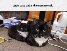 Uppercase cat and lowercase cat......