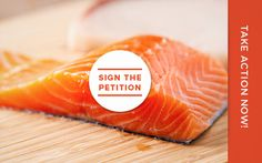 Target, Meijer, Whole Foods commot NOT to sell GM fish!! Tell other grocers to do the same at Center for Food Safety