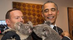 In this handout photo provided by the Australia, Australia's Prime Minister Tony Abbott and United States' President Barack Obama meet Jimbelung the koala before the start of the first Get premium, high resolution news photos at Getty Images Barack Obama, Obama President, Ugly Animals, Cute Animals, Pictures Of The Week, Cool Pictures, Amazing Photos, Funny Pictures, Presidente Obama