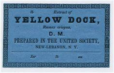 Extract of Yellow Dock, Rumex crispus :: Shaker Ephemera