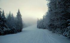 Beautiful and white winter.