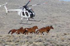 Wild Horse Education  Information on the management of Wild Herds in America