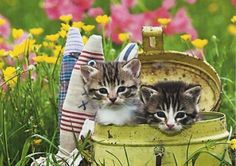 Two kittens in a can - Cats Wallpaper ID 1337283 - Desktop Nexus Animals