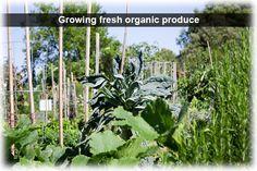 growing fresh organic produce