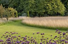 naturalized grasses and purple flowers - mowed and natural grasses / repinned on www.tobydesigns.com