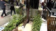 NewCa.com: 2016 Canada Blooms. Rain Garden.  One of the most effective ways to protect our fresh water resource is to keep the water on site and allow it to percolate into the naturally purifying earth.  This prevents storm water runoff, overloading of our sewer systems and recharges the water table. @Canada Blooms #canadablooms2016 #canadablooms #flowers #florist #plants  #blossom #bloom #blooms gardening #flowerparty #gardens