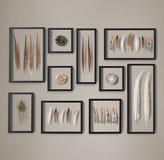 Framed Feather Collection - ring-necked and Lady Amherst's pheasant feathers