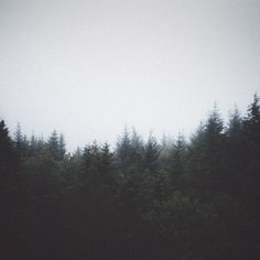 Pine forest, waiting for...