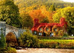 Autumn colours: sunlight hits the 15th-century cottage that houses the Tu Hwnt i'r Bont tearooms on the banks of the River Conwy in the UK.