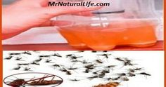 Mosquitoes and cockroaches will fall dead immediately with this simple homemade recipe !