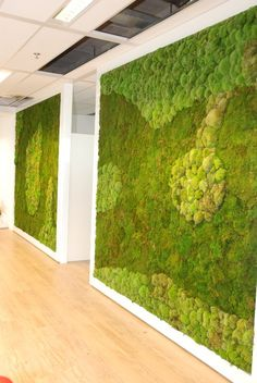 Green Walls - Mummie Plants