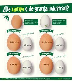 Si han tenido la oportunidad de probar huevos de campo (criollos), se habrán dado cuenta que además de verse diferente, saben diferente.  Pero eso no es todo, los huevos de campo efectivamente tienen más cantidad de nutrientes que los huevos industriales. Aquí algunos de ellos.