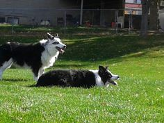 Mies and Pua enjoying an unseasonably warm day at the park.  November in Utah.
