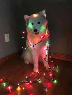 First Christmas dog Cute Little Animals, Cute Funny Animals, Funny Dogs, Beautiful Dogs, Animals Beautiful, Dog Pictures, Animal Pictures, Cute Dogs And Puppies, Doggies