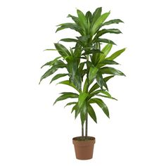 Dracaena Silk Plant (Real Touch) Authentic style stems covered with rich foliage create a look that can't be imitated. Towering in at 43 inches high, this lovely Dracaena silk plant is a treasure to behold, and feels real to the touch. Silk Plants, Fake Plants, Plants Indoor, Hanging Plants, Fake Indoor Trees, Porch Plants, Indoor Garden, Potted Plants, Artificial Tree