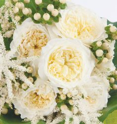 #Patience is a strong-scented old rose whose buttermilk color is perfect for matching with any white or cream #gown. It is sought-after for both its #classic hues and #textured petals, 165 per rose. Patience perfectly suits #traditional white wedding décor.