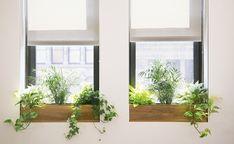 Indoor window ledge by 1000 ideas about indoor window boxes on. Indoor Window Planter, Indoor Window Boxes, Window Plants, Window Ideas, Hanging Plants, Best Office Plants, Plantas Indoor, Window Ledge, Bay Window