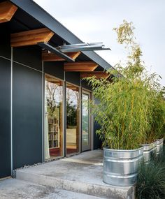 Freedom in 704 Square Feet - NYTimes.com  Rain scupper into bamboo plants for privacy.