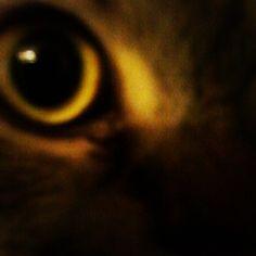 "@Sabine Schönberg's photo: ""Katzenauge."""