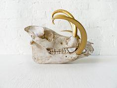 Wild Boar Skull w/ 24k Gold Tusks by EarthSeaWarrior on Etsy, $325.00