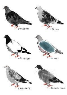 Alice Tait Homing Pigeons Print // Made