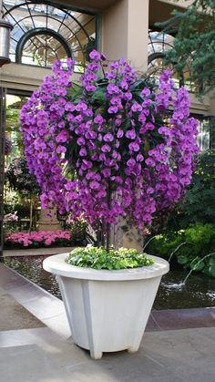 Grand Orchid-Display of Moth-Orchid [Phalaenopsis] at Longwood Garden, PA.now that's an orchid tree.love this idea. Orchid Tree, Moth Orchid, Longwood Gardens, Purple Flowers, Beautiful Flowers, Purple Orchids, Dendrobium Orchids, Simply Beautiful, Pot Jardin