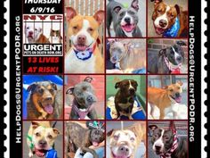"""6/9 Please Share! SUPER URGENT tap picture 17BEAUTIFUL LIVES OF DOGS TO SAVE 6/9TO BE DESTROYED STARTING 12NOON PLEASE SAVE US WE ONLY HAVE A FEW MINS / HOURS TO LIVE BEFORE WE GO TO DOGGY HEAVEN THANK YOU PLEASE REPIN AND SHARE THIS INFORMATION  TIME IS CRITICAL THANK YOU IRISH : . Please share! The shelter closes at 8pm. Go to the ACC website( http:/www.nycacc.org/PublicAtRisk.htm) ASAP to adopt a PUBLIC LIST dog (noted with a """"P"""" on their profile) and/or work with a rescue group if you…"""