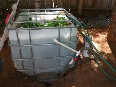Catfish farming can be started in a 55 gallon food grade for Catfish aquaponics