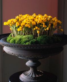 Lovely MOSSY URN with YELLOW CROCUSES. photo by Dana Gallagher - desiretoinspire.net