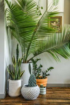 75 Smartest Way House Plants Decor Indoor Ideas - perfect home decor ideas Best Indoor Plants, Indoor Garden, Indoor Plant Decor, Indoor Planters, Cheap Planters, Tall Planters, Modern Planters, Concrete Planters, Ceramic Planters