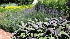 Want to reduce the usage of commercial drugs? If you do, grow healing herbs and spices in your garden. Starting with these amazing healing herbs and spices!