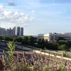 A beautiful day in Chicago!