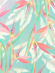 Birds of Paradise by Laine Fraser - Designer and Illustrator