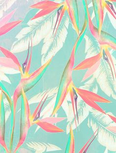 Birds of Paradise by Laine Fraser - Designer and Illustrator