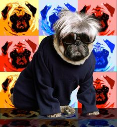 ANDY WARHOL This cheeky pug loves getting into character as these amazing pictures show. Graphic Designer Lisa Knapp came up with the novel idea of dressing up her 11-year-old pet Charlie as iconic figures. Among the selection is Tudor King Henry VIII and French military leader Napoleon Bonaparte.