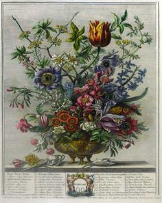 """Engraved by Henry Fletcher, painted by Pieter Casteels for Robert Furber's """"Twelve Months of Flowers"""" (1730) and """"Twelve Months of Fruit"""" (1732) via BOOKTRYST: September 2011"""