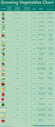 if I ever get around to making the raised garden on our balcony this will come growing vegetables chart.if I ever get around to making the raised garden on our balcony this will come in handy! Organic Gardening, Gardening Tips, Urban Gardening, Texas Gardening, Gardening Services, Gardening Books, Gardening Gloves, Hydroponic Gardening, Gardening Websites