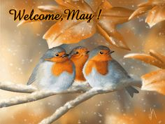 SOLARIS                           : WELCOME,MAY !  Mensagem
